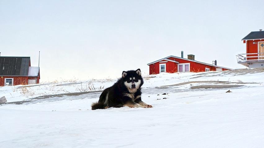 Groenland Rodebay chien neige