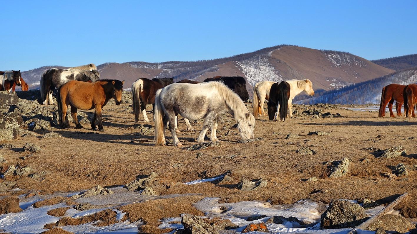 Vallée de l'Orkhon chevaux montagnes ciel bleu