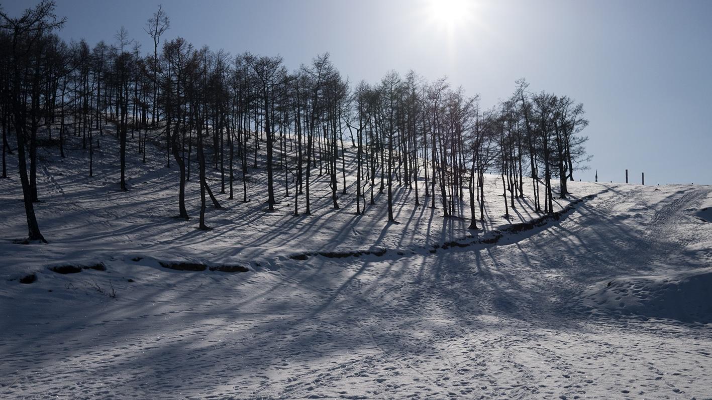 Arbres Olkhon neige soleil