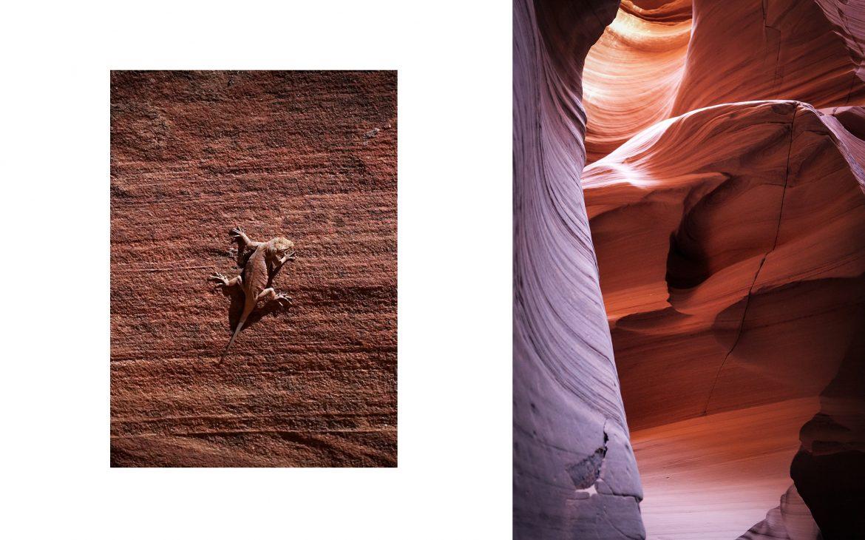 Canyon X ocre lézard