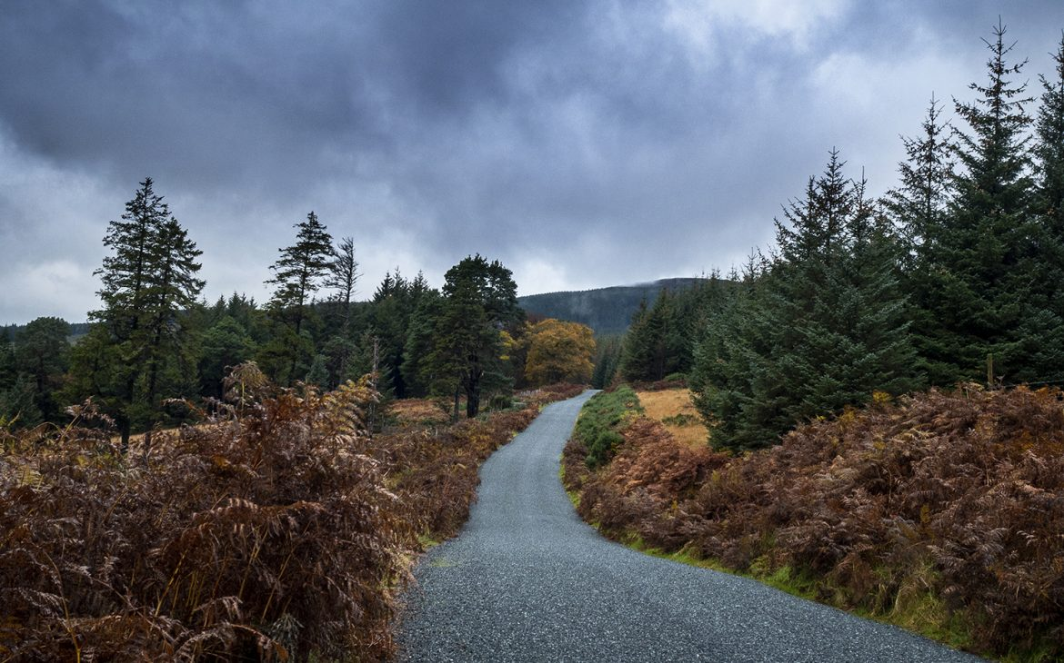 Wicklow Mountains route automne arbres