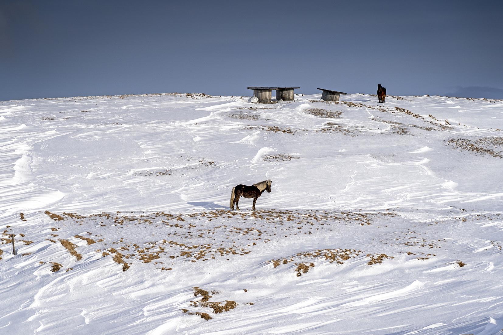 Islande du Nord cheval neige ciel bleu