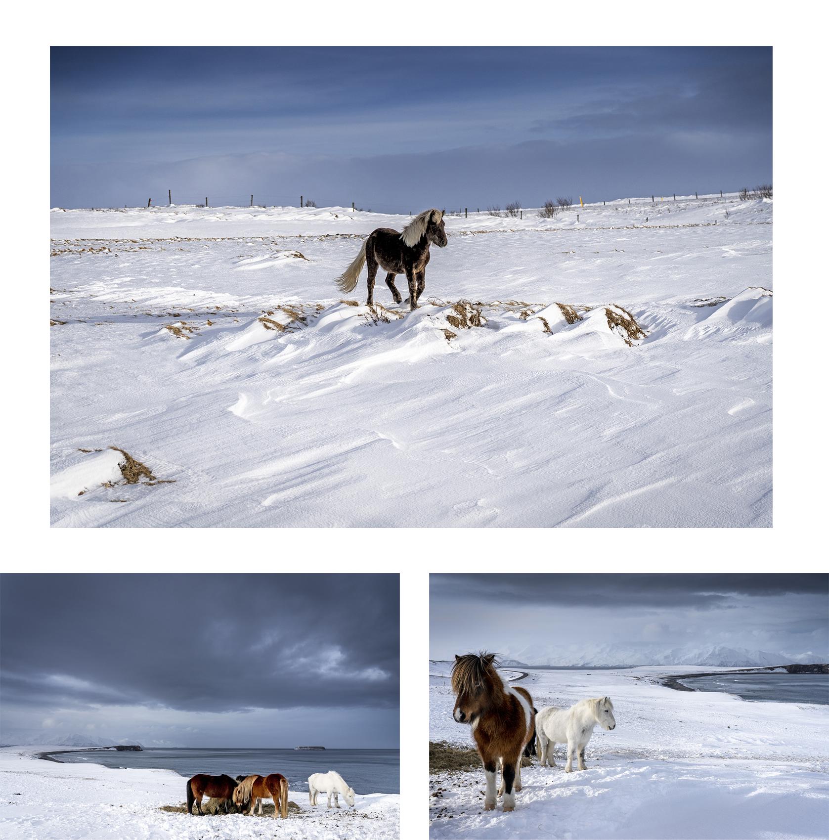Islande du Nord chevaux neiges falaises mer
