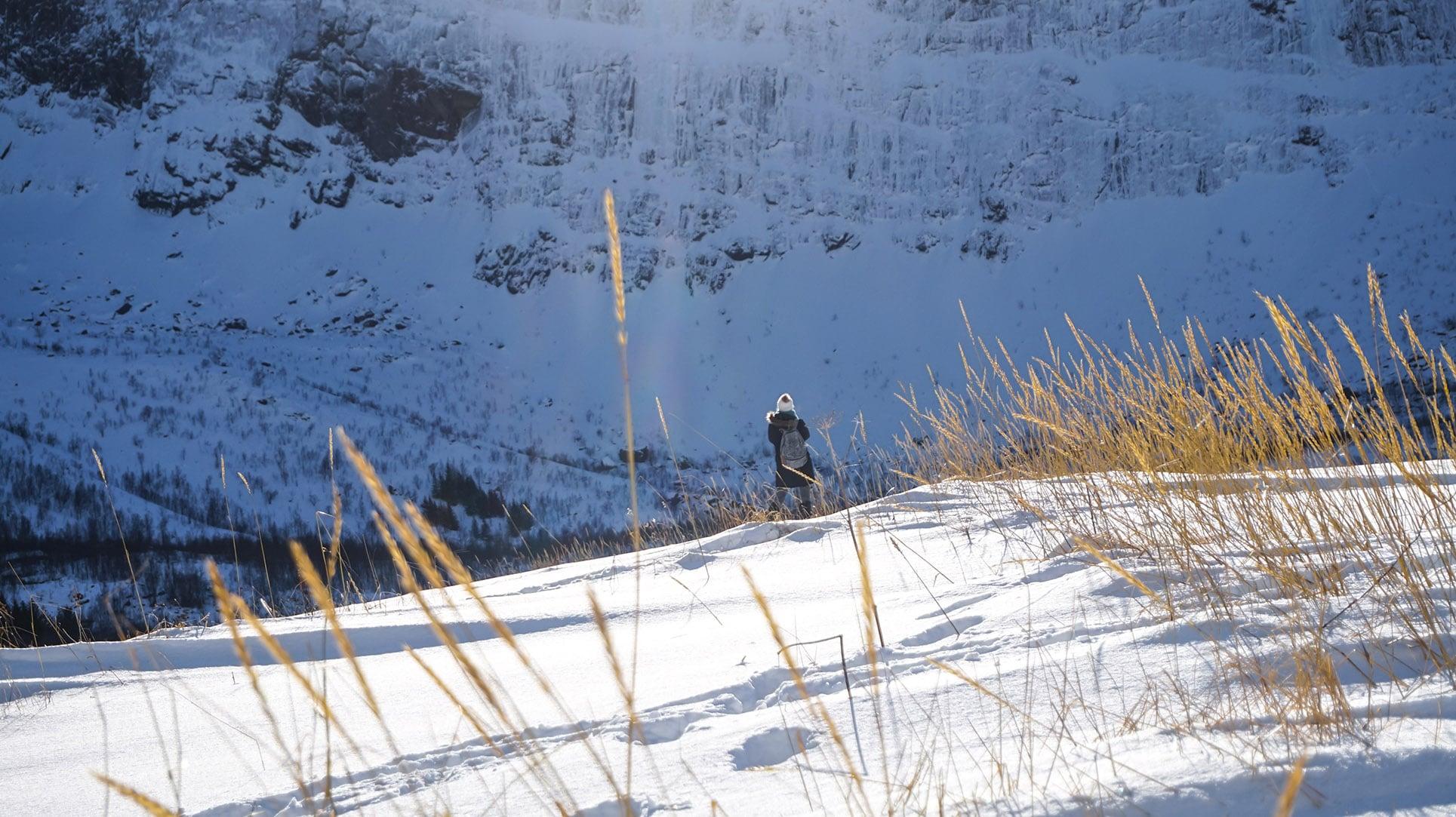 Mefjordvaer mer montagne  épis de blé Norvège en hiver