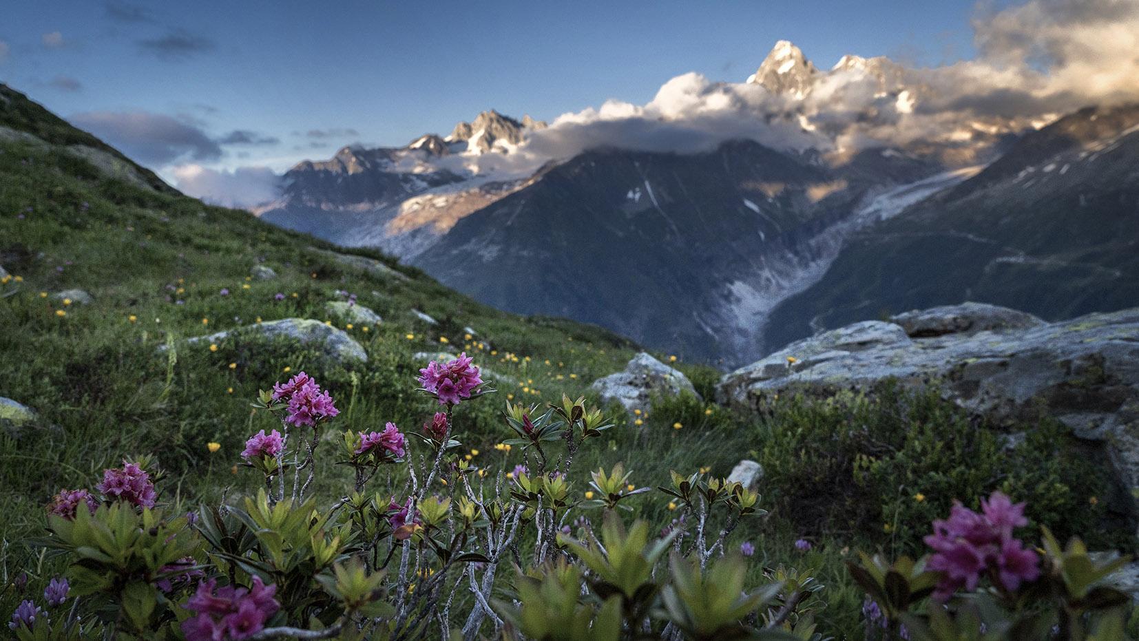 Bivouac lac Cheserys fleurs violettes herbe sommets neige nuages ciel bleu