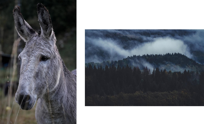 Jura âne nature montagnes brume sapins