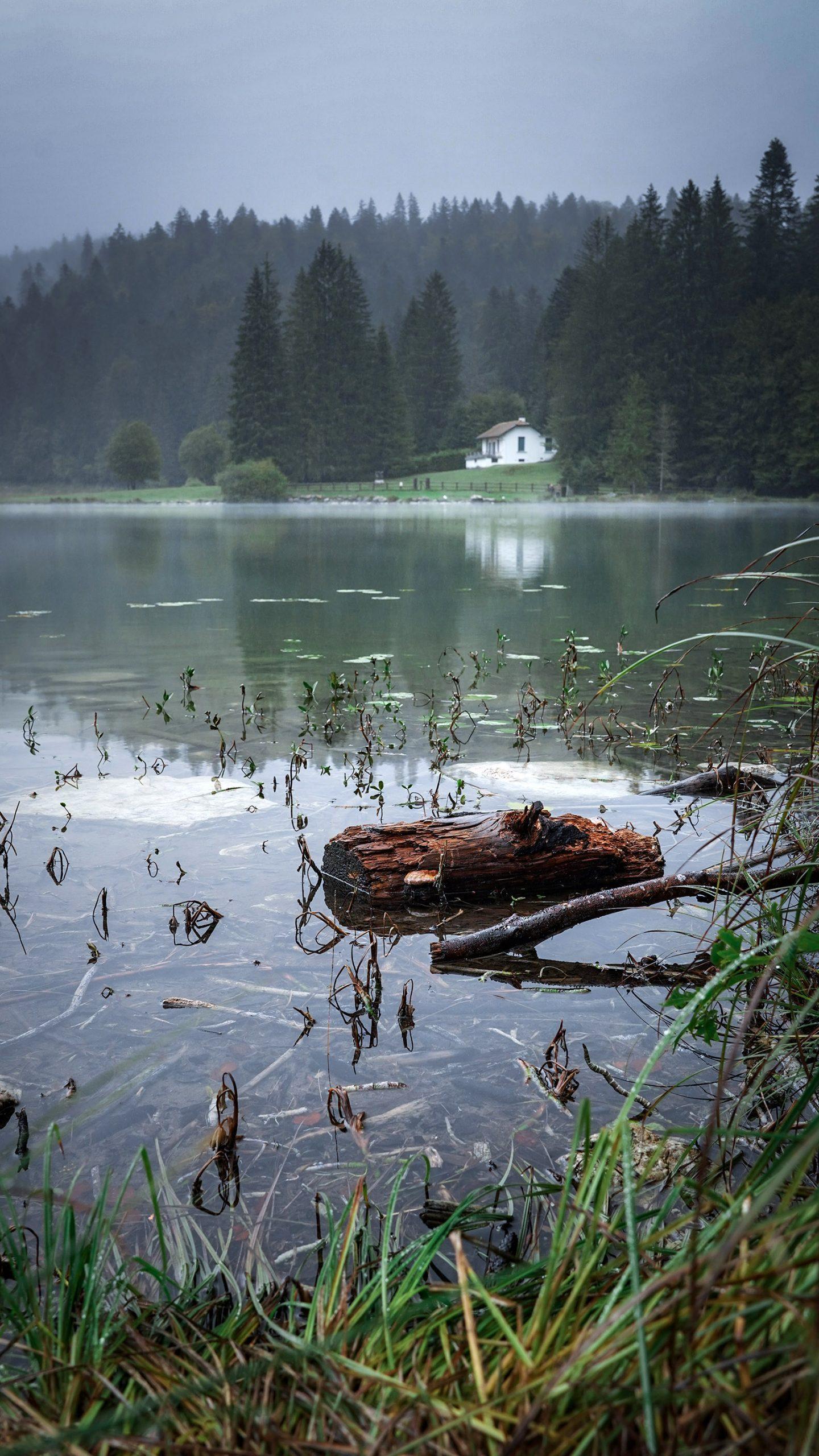 lac Genin automne brouillard nénuphars bois