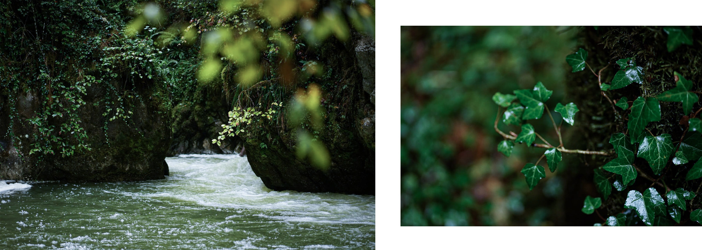 Gorges de l'Abîme torrent mousse plantes