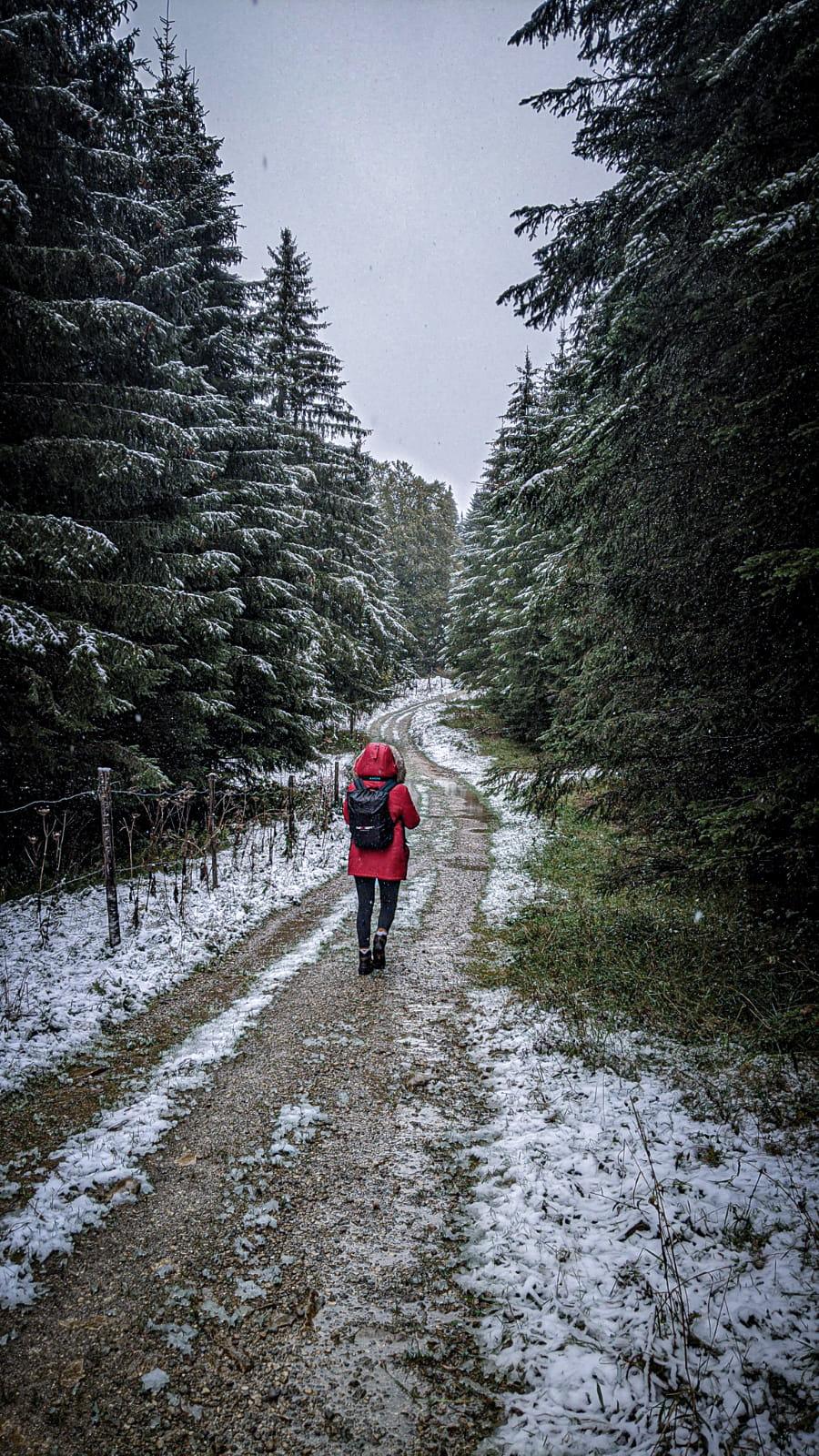 Sentier sapins virage lykorne neige
