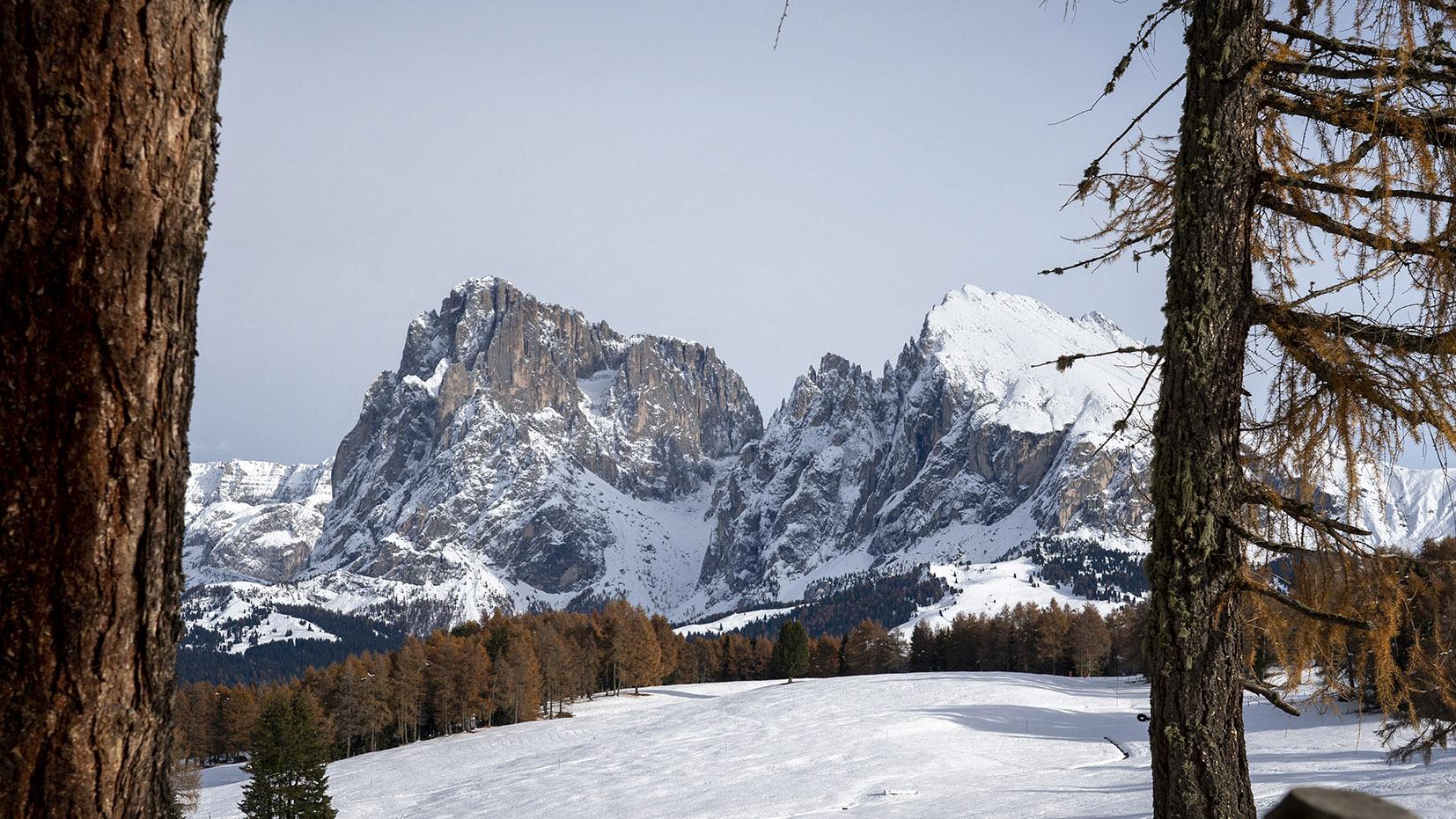 Une semaine dans les Dolomites Alpe di Suisi automne neige montagnes troncs