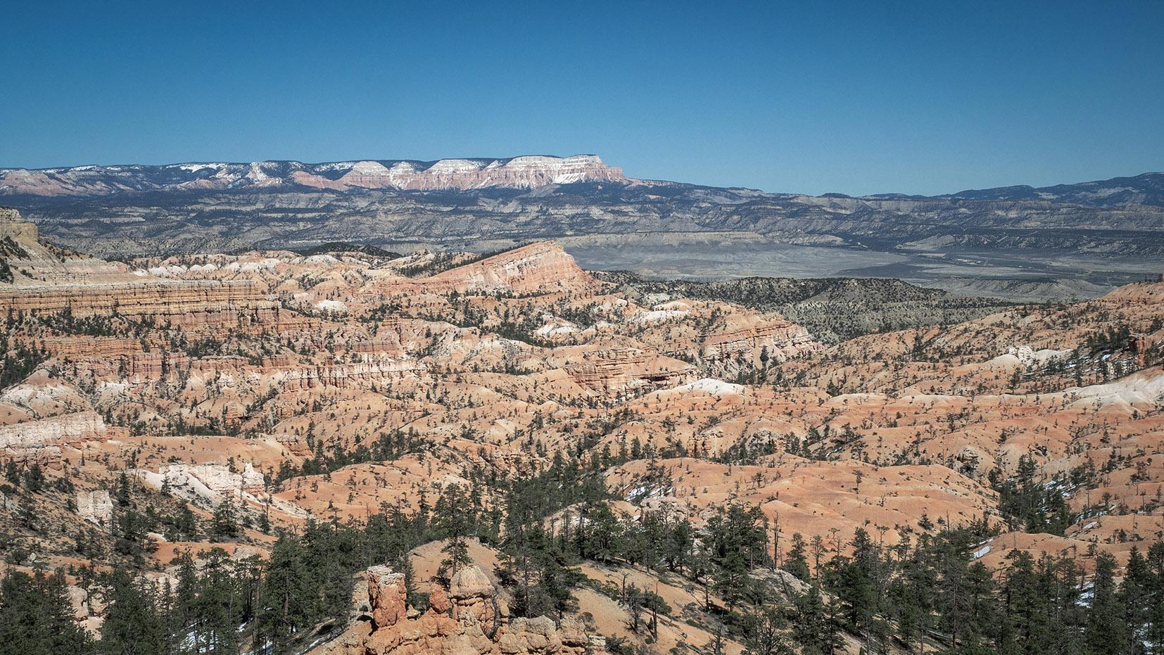 vue Utah USA sapins ciel bleu roche rouge