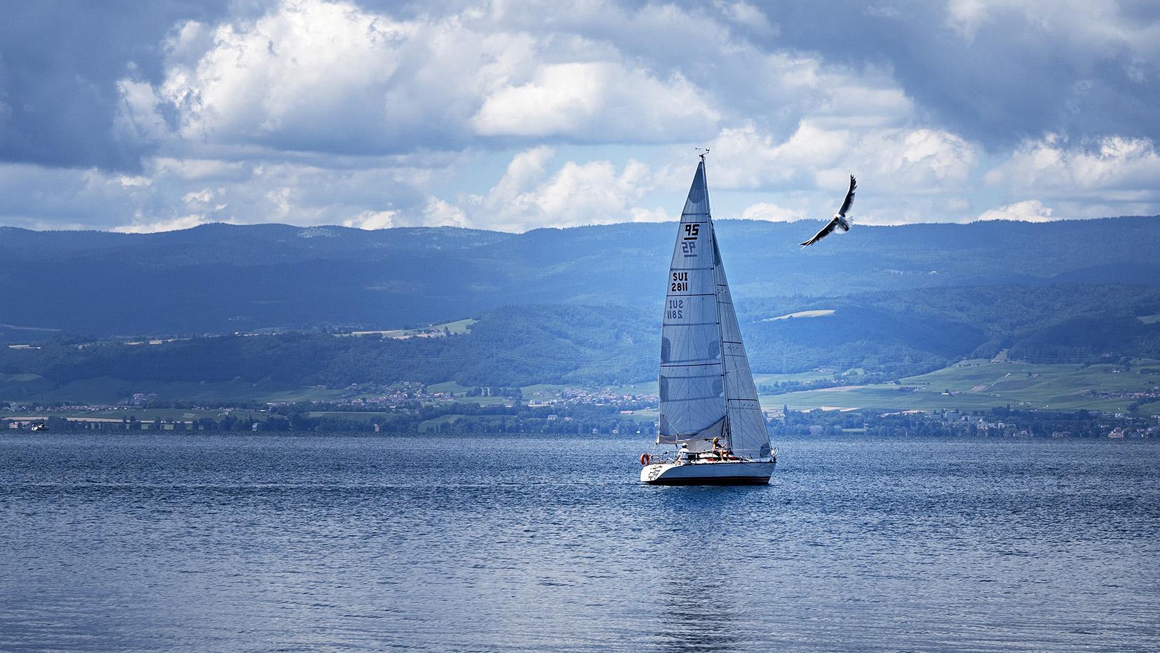 Lac Léman voilier oiseau Haute-Savoie