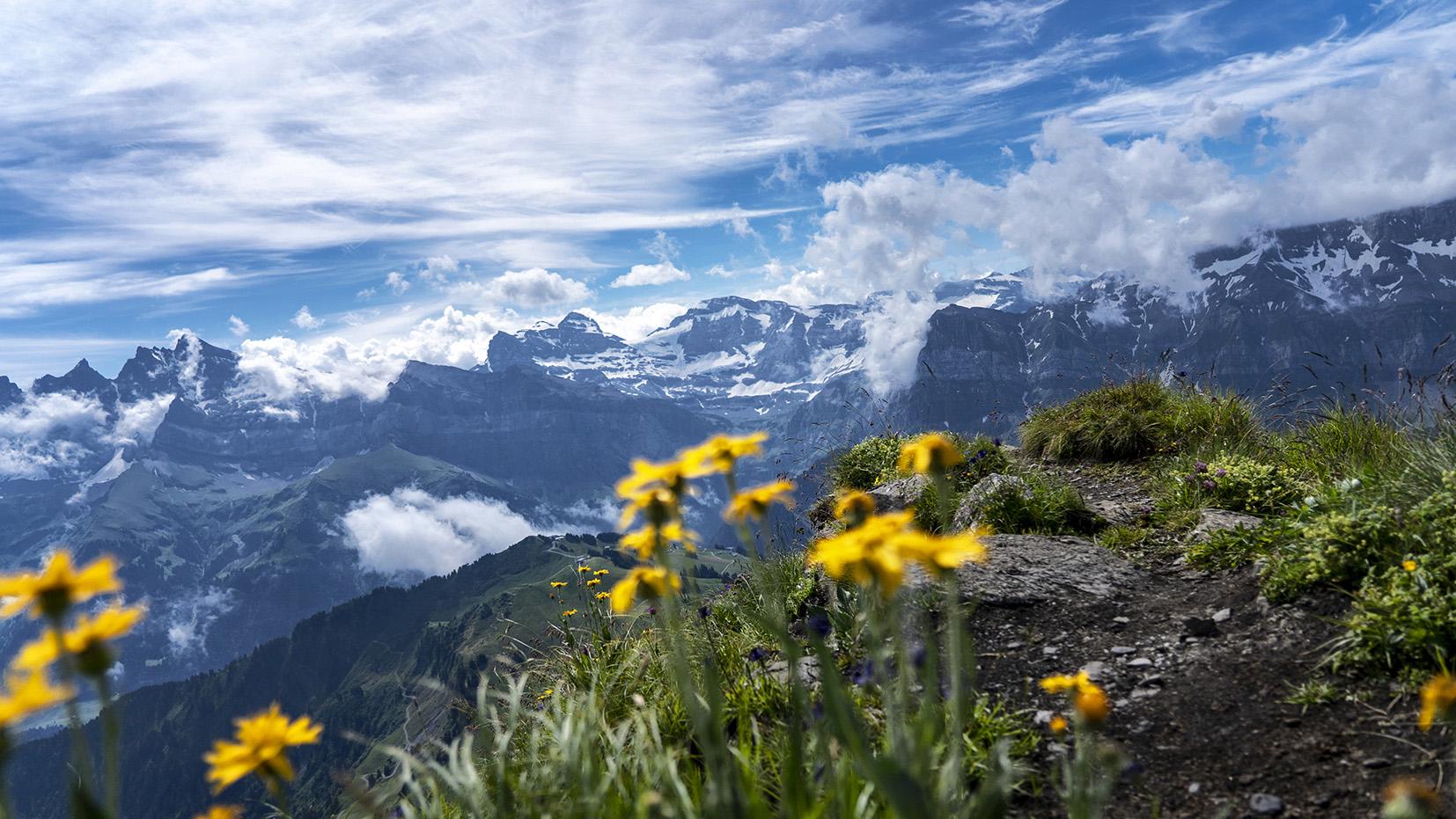 pointe des Mossettes fleurs jaunes montagnes suisse nuages ciel bleu
