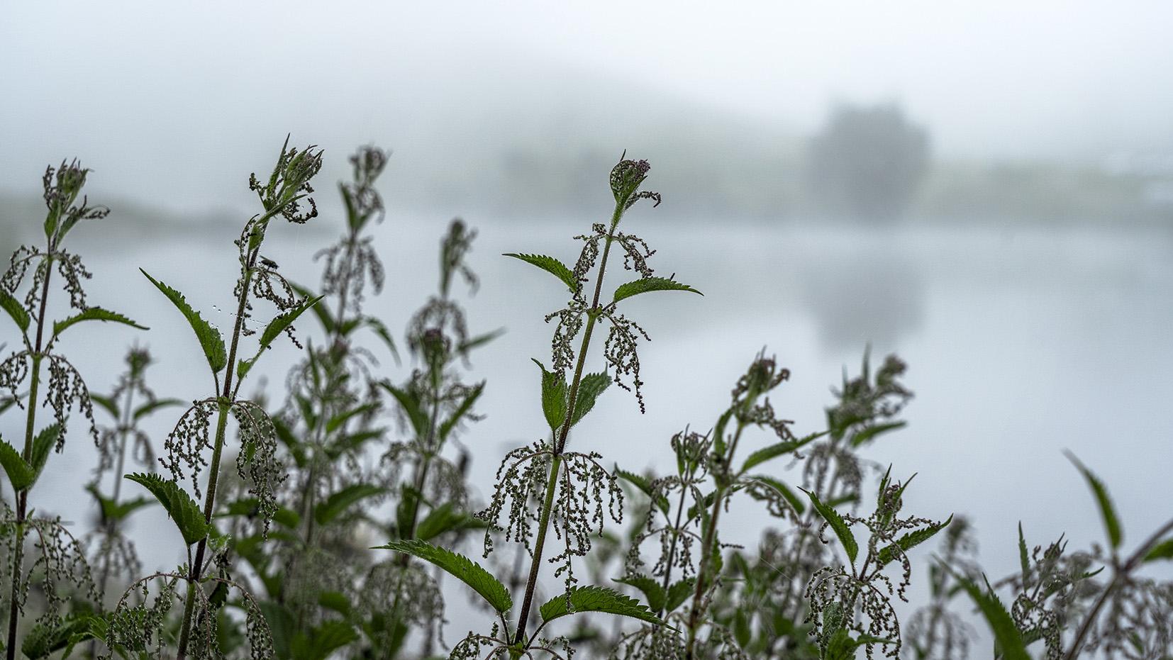 lac de Joux Plane Haute-Savoie fleurs brouillard